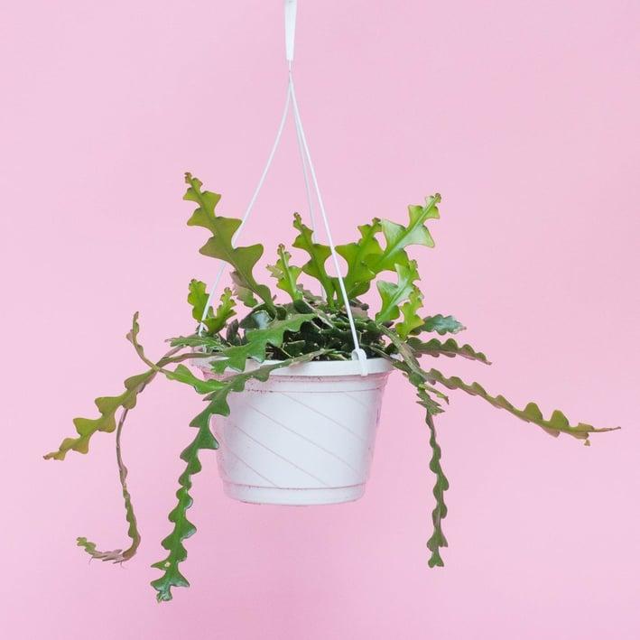 2021-interior-design-trends-fishbone-cactus-houseplant